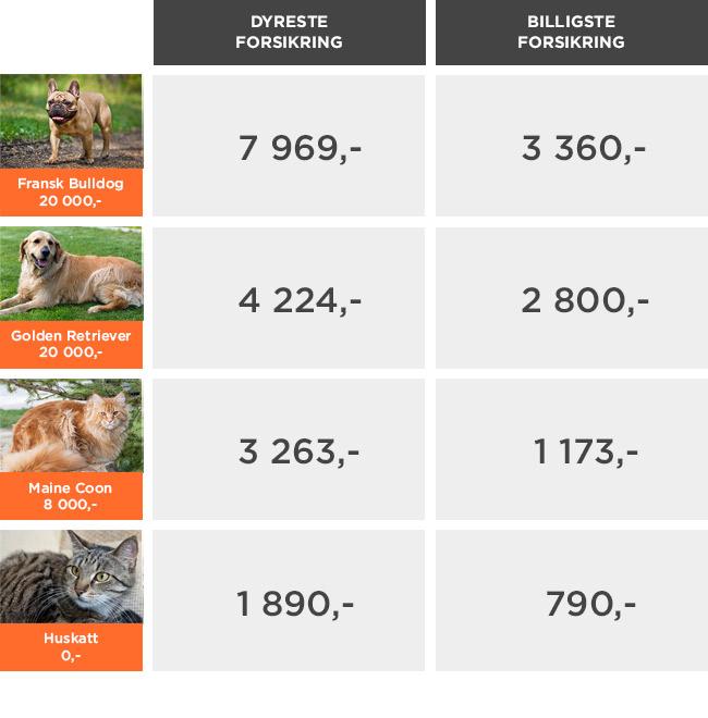 Stor prisforskjell på test av hundeforsikring og katteforsikring