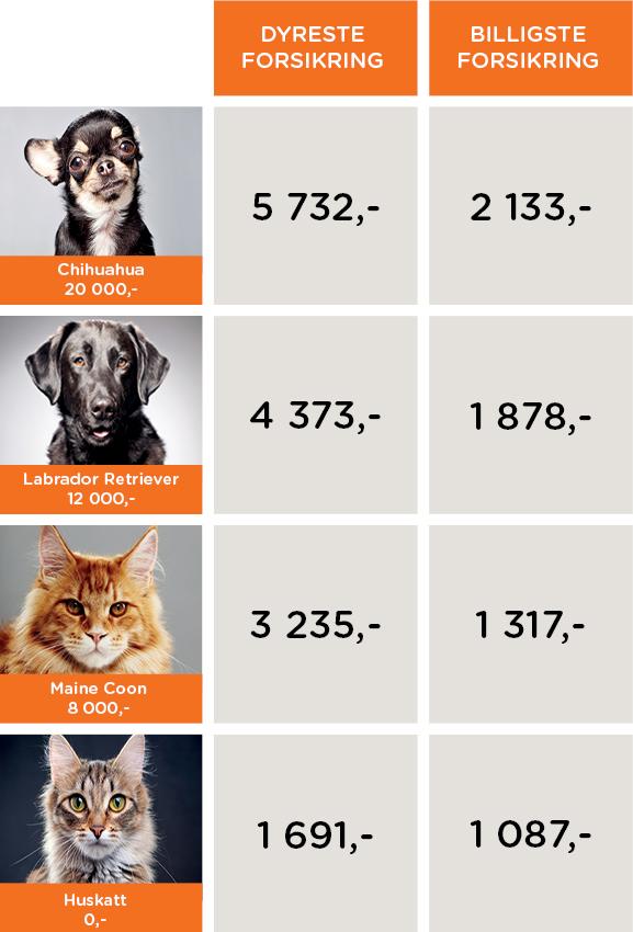 Hundeforsikring og katteforsikring
