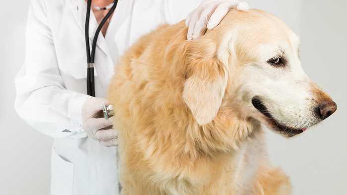Test av hundeforsikring og katteforsikring